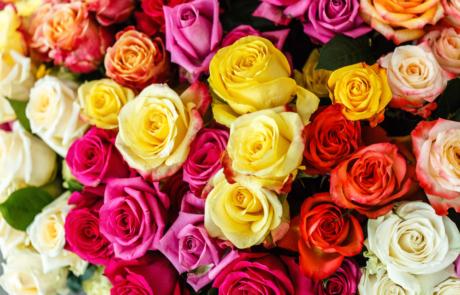 Gekleurde-rozen